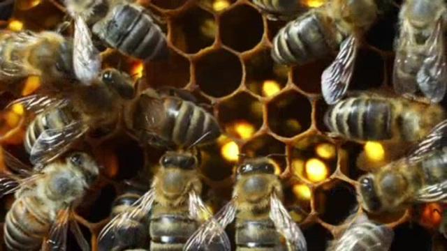 Wildbienen und Schmetterlinge Video 3