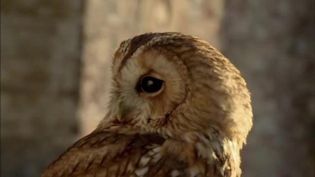 Wunder der Natur - David Attenborough Staffel 1&2 Video 3