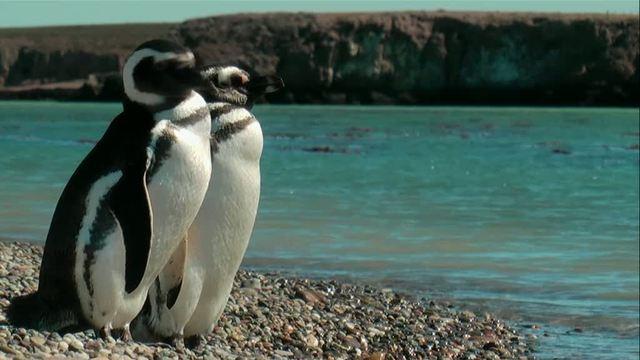 Patagonien – Auf den Spuren von Charles Darwin Video 2
