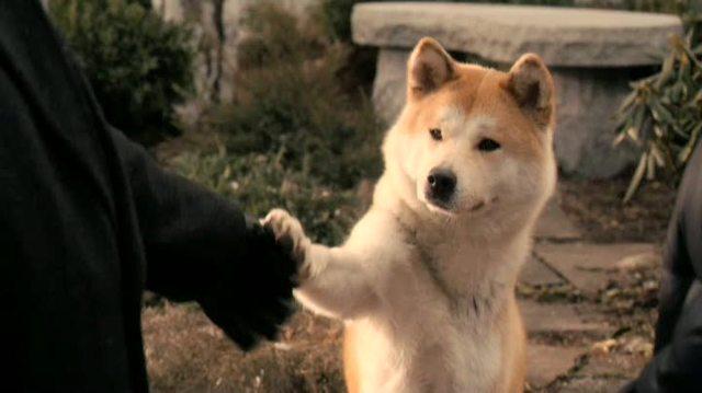 Hachiko - Eine wunderbare Freundschaft Video 3